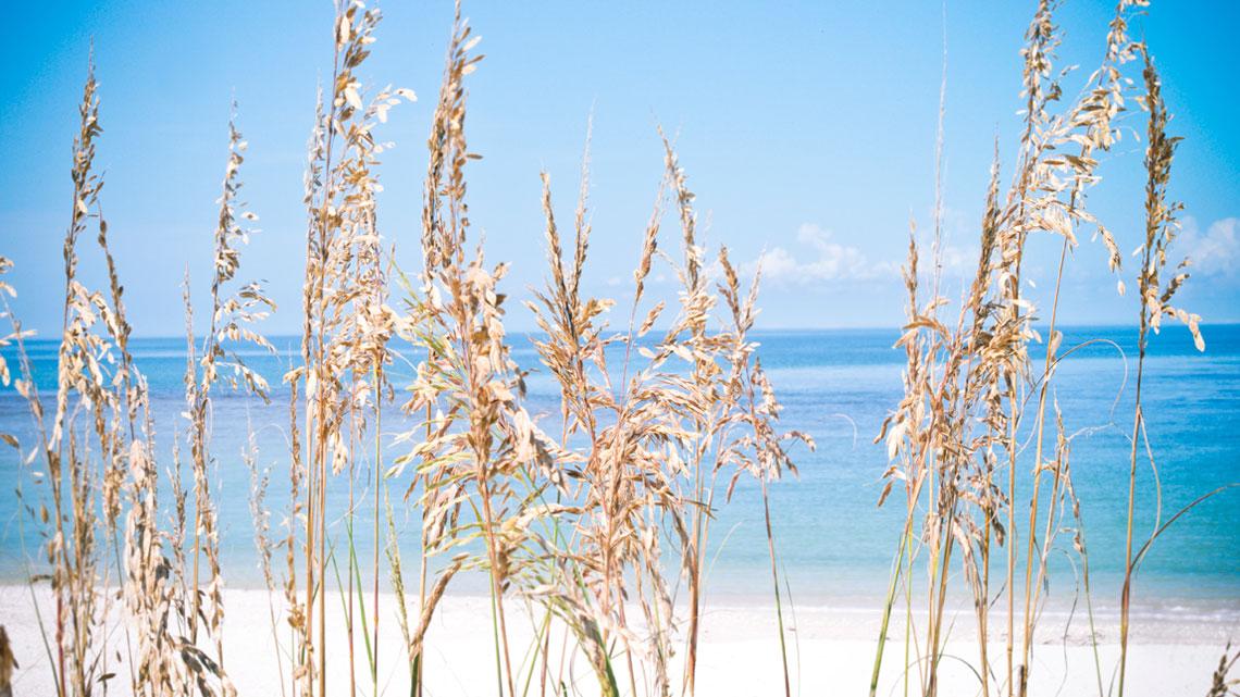 Pelican Bay - Beach